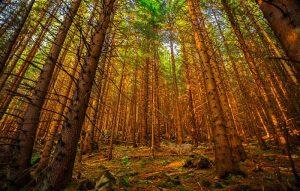 Turistické trasy Vysoké Tatry vás očaria aj v lete aj v zime
